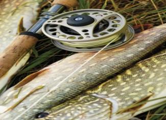 Fishing Contests